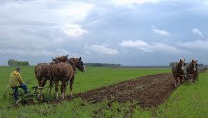 Plowed field 2