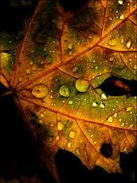 Leaf fall tears